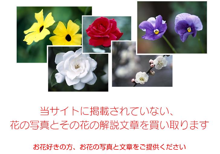 当サイトに掲載していない花データを募集中!